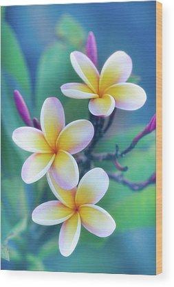 Jade Wood Prints