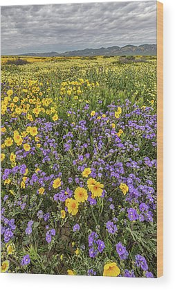 Designs Similar to Wildflower Super Bloom