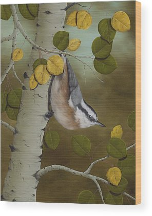 Red-breasted Nuthatch Wood Prints