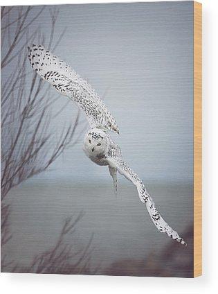 Wings Wood Prints