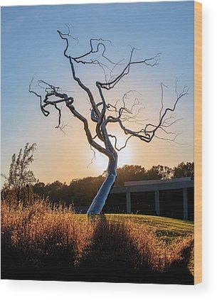 Barren Tree Wood Prints
