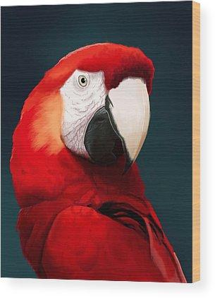 Macaws Wood Prints