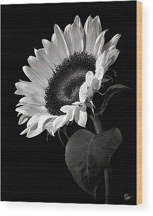 White Flower Wood Prints