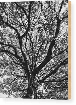 Bear R Humphreys Wood Prints