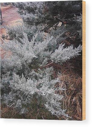 Cedar Wood Prints