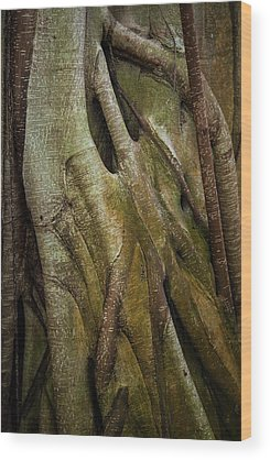 Fig Tree Wood Prints