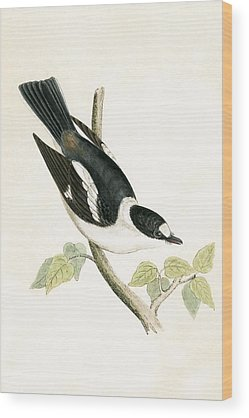 Flycatcher Wood Prints