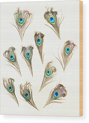Peacock Feather Wood Prints
