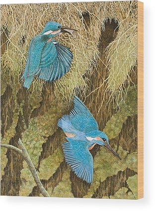 Kingfisher Wood Prints