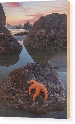 Starfish Photographs Wood Prints