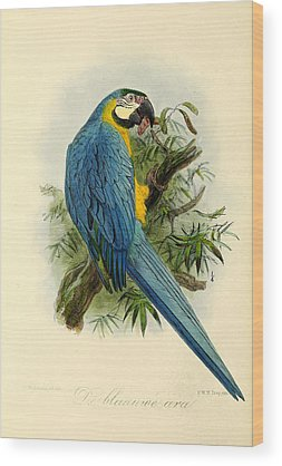 Parakeet Wood Prints