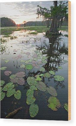 Caddo Lake Wood Prints