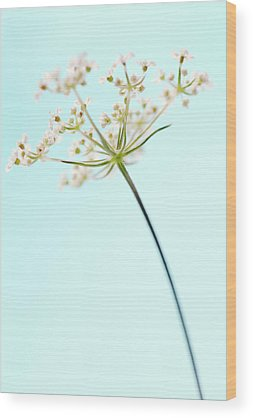 Cow Parsley Wood Prints
