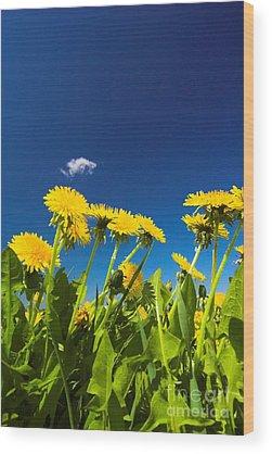 Dandelion Wood Prints