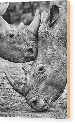 Zoo Animal Wood Prints