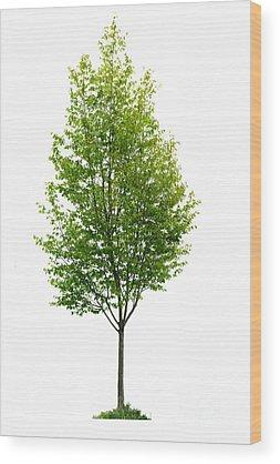Lone Tree Wood Prints