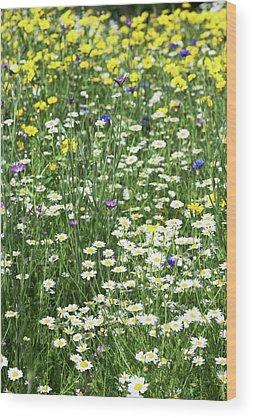 Agrostemma Githago Wood Prints