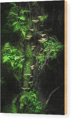 Moss Wood Prints