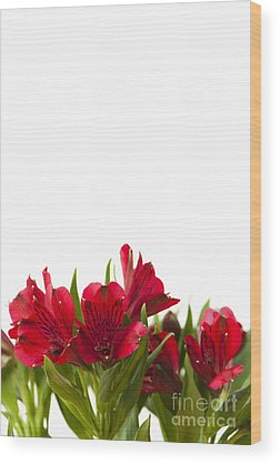 Day Lily Wood Prints