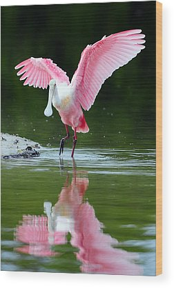 Spoonbill Wood Prints