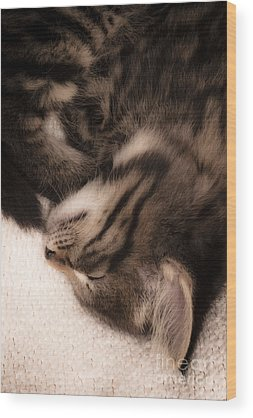 Puss Wood Prints