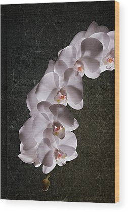 White Orchid Wood Prints