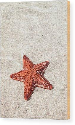 Starfish Wood Prints