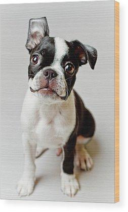 Puppy Wood Prints