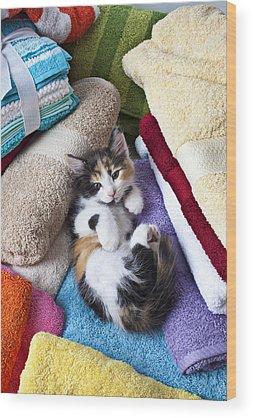 Calico Kitten Wood Prints