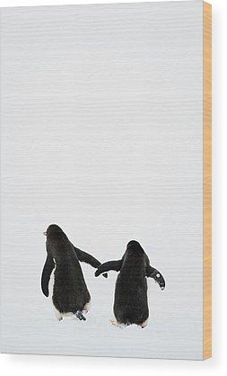 Cold Wood Prints
