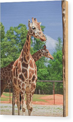West African Giraffe Wood Prints