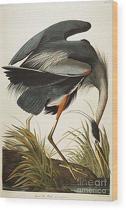 Heron Wood Prints