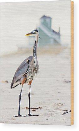Shore Bird Wood Prints