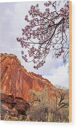 Cherry Blossom Tree Wood Prints