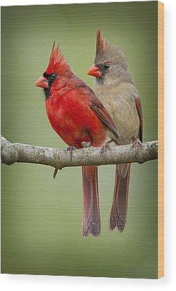 Cardinal Wood Prints