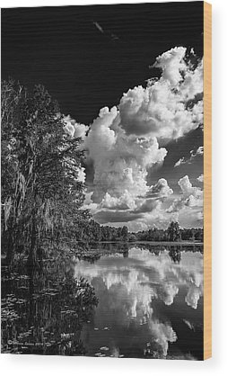 Bald Cypress Wood Prints