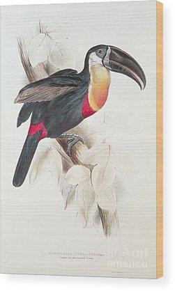 Audubon Wood Prints