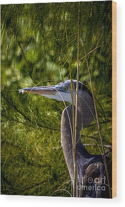 Snowy Egret Wood Prints