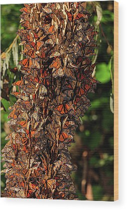 Monarch Butterfly Migration Wood Prints