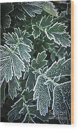 Icy Leaves Wood Prints