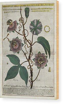 Passionflower Wood Prints