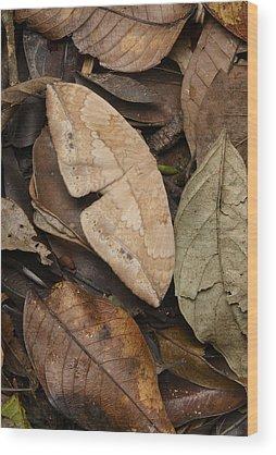 Ch Wood Prints