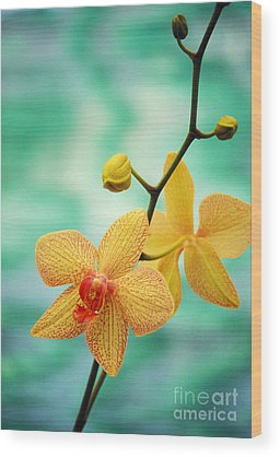 Orchids Wood Prints