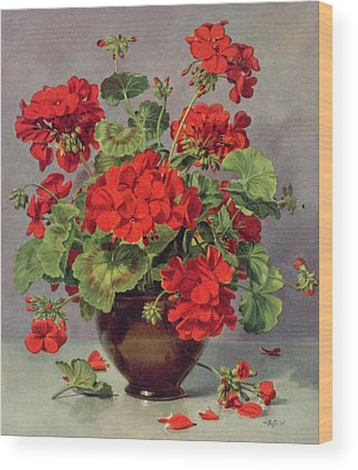 Red Geraniums Wood Prints