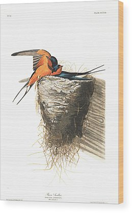 Barn Swallow Wood Prints