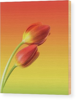 Tulip Wood Prints