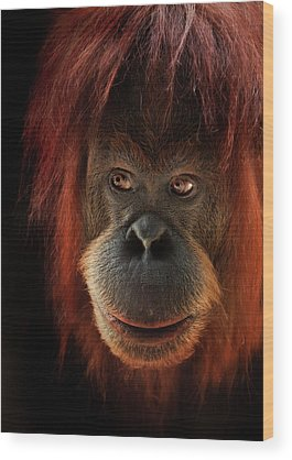 Orangutan Wood Prints