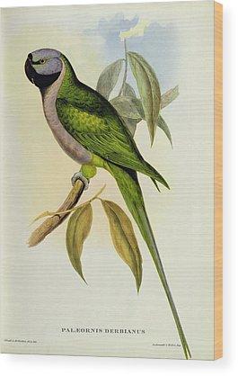 Parakeet Wood Prints