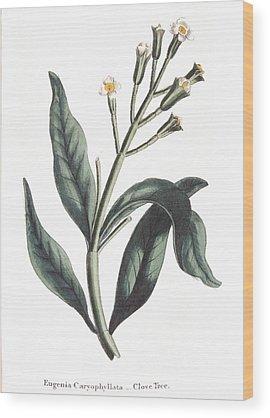 Native Garden Wood Prints