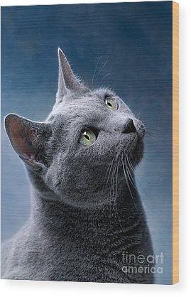 Cats Wood Prints